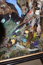 A Victorian taxidermy display of exotic birds