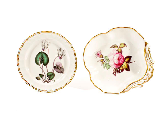 A Derby botanical dish of pattern 141 and a Derby shell-shaped dish, early 19th century