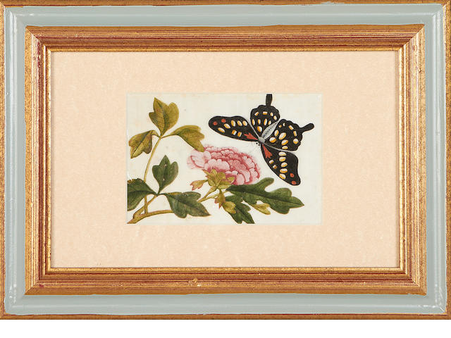A set of twelve small 19th century Chinese rice paper paintings of butterflies