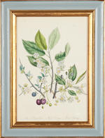 A set of twelve 19th century hand coloured Botanical prints