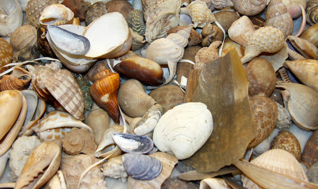 A collection of assorted shells