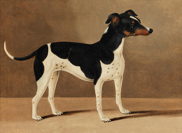 English School, 19th century A profile portrait of a Jack Russell**********
