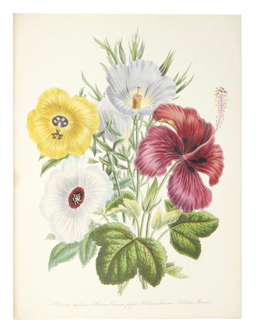 LOUDON (JANE WEBB) The Ladies' Flower-Garden of Ornamental Greenhouse Plants, 1848
