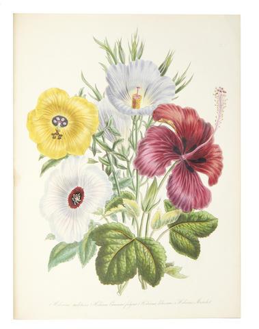 LOUDON (JANE WEBB) The Ladies' Flower-Garden of Ornamental Greenhouse Plants, 1848