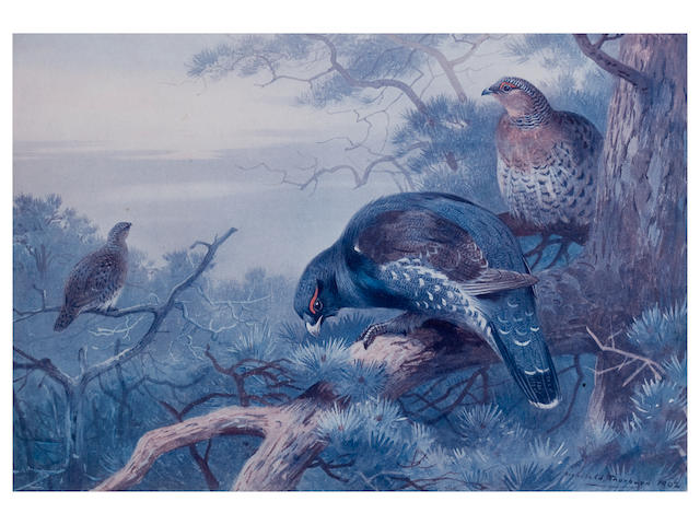 After Archibald Thorburn Sporting birds 20x30cm