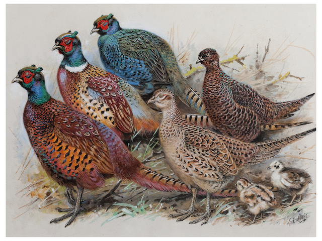 George Edward Lodge (British, 1860-1954) Pheasants