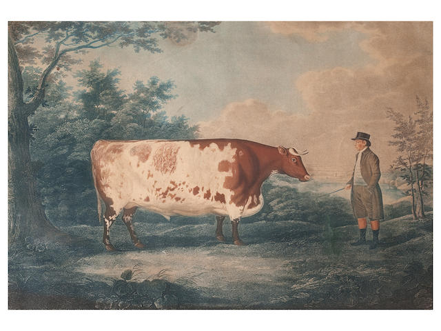 After John Boultbee The Durham Ox
