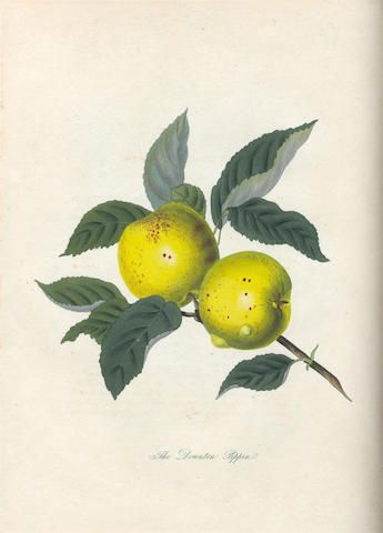 KNIGHT (THOMAS ANDREW) Pomona Herefordiensis: Containing Coloured Engravings of the Old Cider and Perry Fruits of Herefordshire