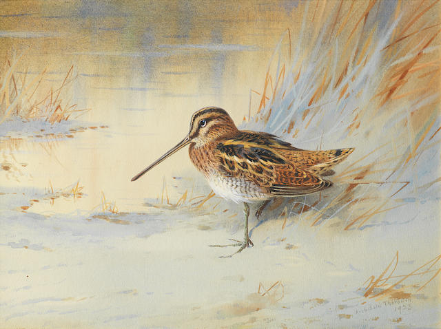 Archibald Thorburn (British, 1860-1935) Snipe