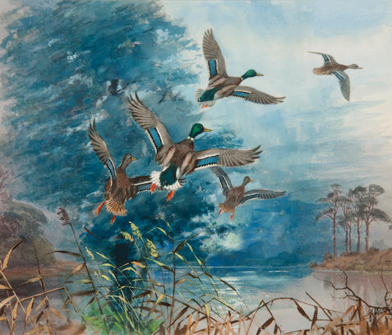 John Cyril Harrison (British, 1898-1985) Mallards rising