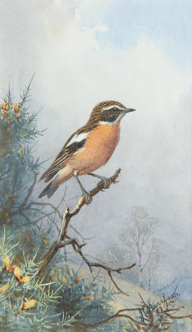 John Cyril Harrison (British, 1898-1985) A Wheatear on a bank; A Whinchat on a branch; A Red Backed Shrike with a wasp, a set of three (3)
