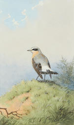 John Cyril Harrison (British, 1898-1985) A Wheatear on a bank; A Whinchat on a branch; A Red Backed Shrike with a wasp; set of three  (3)