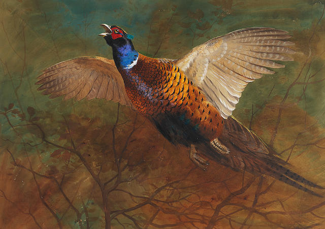 Archibald Thorburn (British, 1860-1935) Cock pheasant in flight
