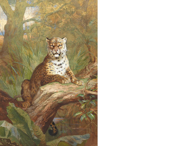 Archibald Thorburn (British, 1860-1935) A Leopard in a tree