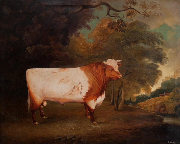 "English School, 19th Century The Shorthorn Bull ""Earl of Derby"", bred by S Wiley, Won 1st prize R.A.S. aged six"