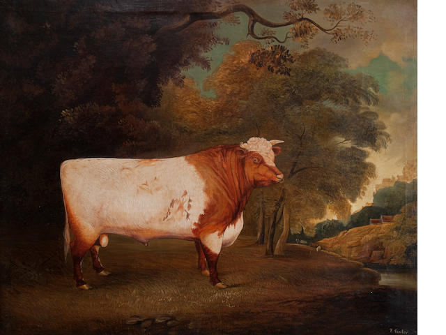 An oil painting of a bull, The Earl of Derby