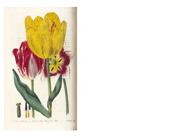 SWEET (ROBERT) The British Flower Garden; Containing Coloured Figures & Descriptions of the Most Ornamental & Curious Hardy Herbaceous Plants, 7 vol. 1823-1838