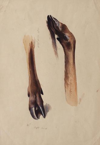 Archibald Thorburn (British, 1860-1935) Deer Slots