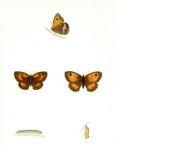 MORRIS (FRANCIS ORPEN) A History of British Butterflies, 1857; A Natural History of British Moths, 4 vol., 1872 (5)