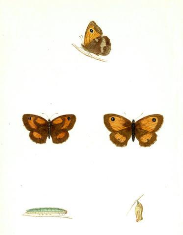 MORRIS (FRANCIS ORPEN) A History of British Butterflies, 1857; A Natural History of British Moths, 4 vol., 1872 (5)