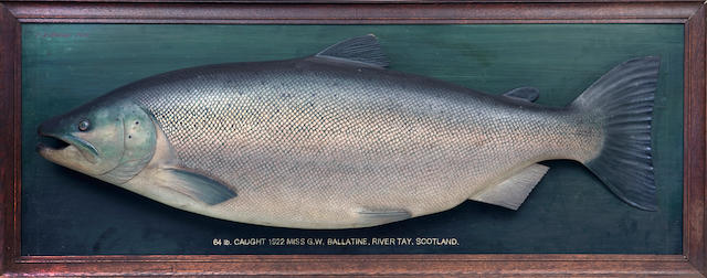 The biggest salmon caught in Britain