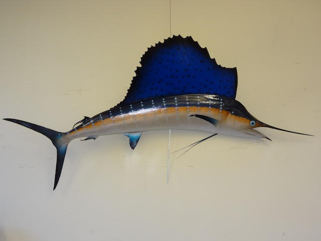 A model of an Atlantic Sailfish