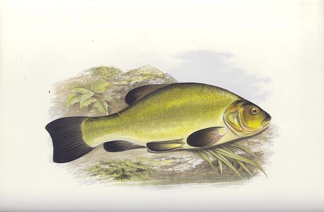 HOUGHTON (WILLIAM) British Fresh-water Fishes, [1879]