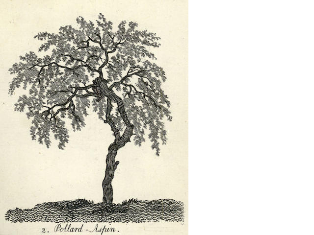 COZENS (ALEXANDER)] The Shape, Skeleton and Foliage of Thirty Two Species of Trees For the Use of Painting and Drawing, April 27, 1771