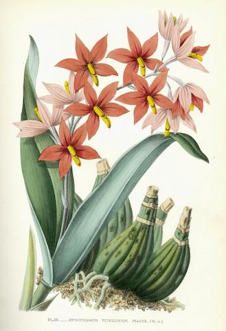 PUYDT (EMILE DE) Les orchidées. Histoire iconographique... avec une revue descriptive des espèces cultivées en Europe