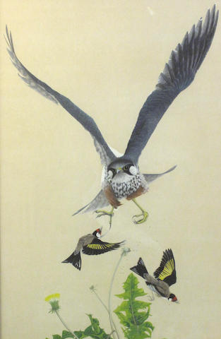 Jonathan Sainsbury, (20th century) Peregrine falcon and goldfinches