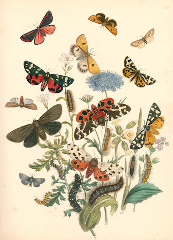 HUMPHREYS (HENRY NOEL) and JOHN OBADIAH WESTWOOD British Moths and Their Transformations, 2 vol. in 3, 1845