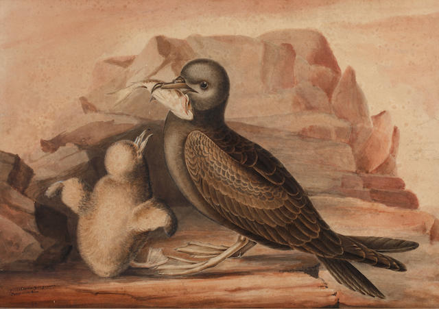 English School, 19th century Nestor Productus; and Puffins