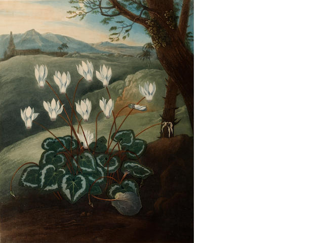 Dr Robert John Thornton (Publisher) (British, London circa 1768-1837) The Perisan Cyclamen; and The Snowdrop aquatints 49 x 40.5 cm. (19 1/4 x 15 7/8 in.)  (PL.)  2