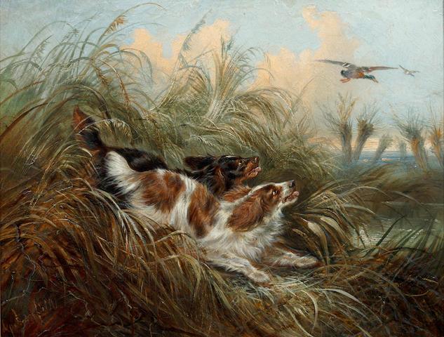 George Armfield (British, 1810-1893) Two spaniels chasing a mallard