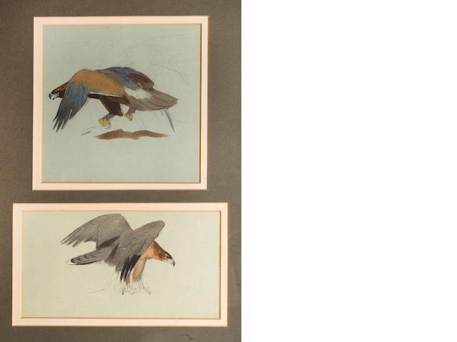 Archibald Thorburn (British, 1860-1935) Two studies of a golden eagle and 9 x 17 cm. (3 1/2 x 7 in.)