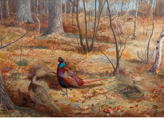 Philip Rickman (British, 1891-1982) Pheasants in an autumnal wooded landscape