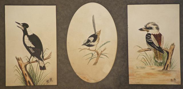A Magpie, a Wren and a Kookaburra