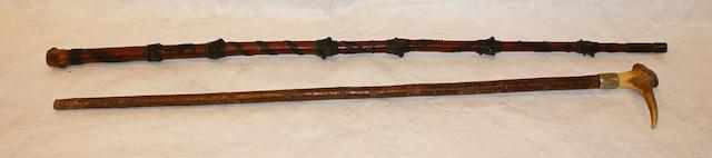 An Australian knotted wood walking stick