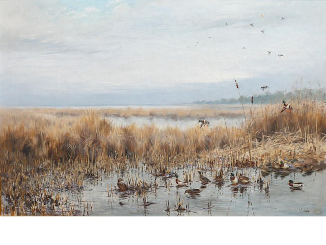 George Edward Lodge (British, 1860-1954) Mallards in flight in a marshy landscape