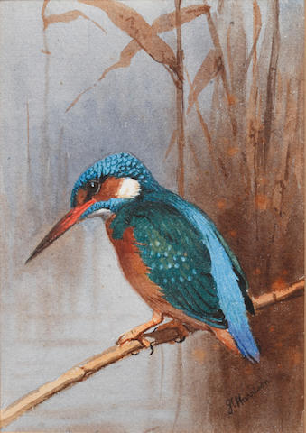 John Cyril Harrison (British, 1898-1985) Kingfisher