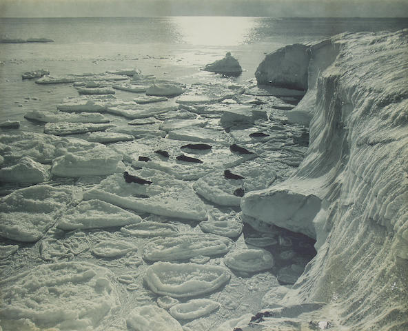 "PONTING (HERBERT GEORGE) ""Seals basking on pancake ice"",  [1911]"