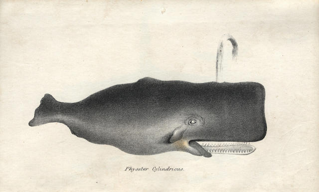 DEWHURST (WILLIAM HENRY) The Natural History of the Order of Cetacea and the Oceanic Inhabitants of the Arctic Regions, Published by the Author, 1834; and two others (3)
