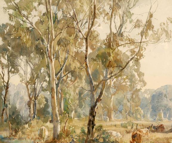 Hans Heysen (1877-1968) Young Gums, Ambleside 1918