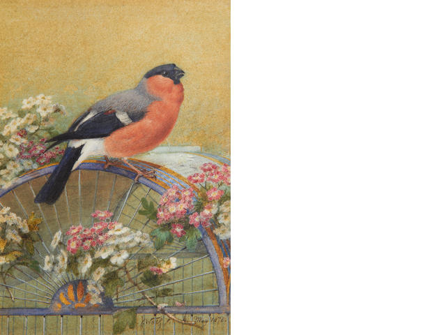 Josef Wolf (German, 1820-1899) The Queen's bullfinch