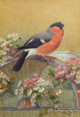 Josef Wolf (German, 1820-1899) The Queen's bullfinch