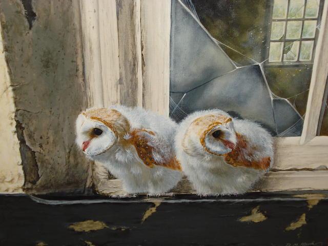 David Clark Barn Owls at a Window,