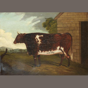 English School, 19th century A Shorthorn heifer
