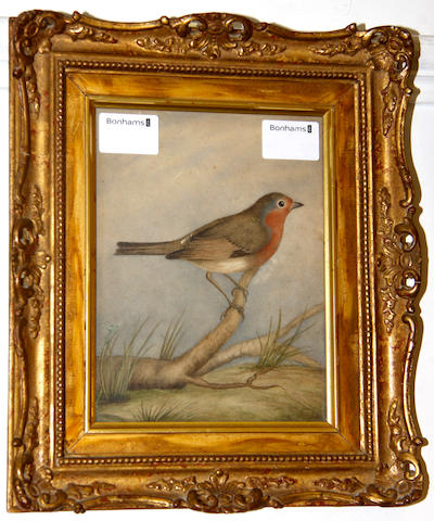 19th Century English School Robin on a Branch