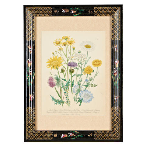 A set of twelve mid 19th century hand coloured engravings of English flowers by Mrs Loudon