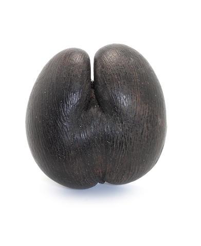 An unworked Coco de Mer nut (Lodoicea Maldivica) 10ins.(25cm) long.